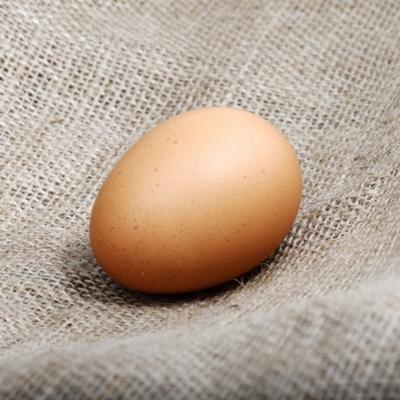 Ortak Besin Yumurta